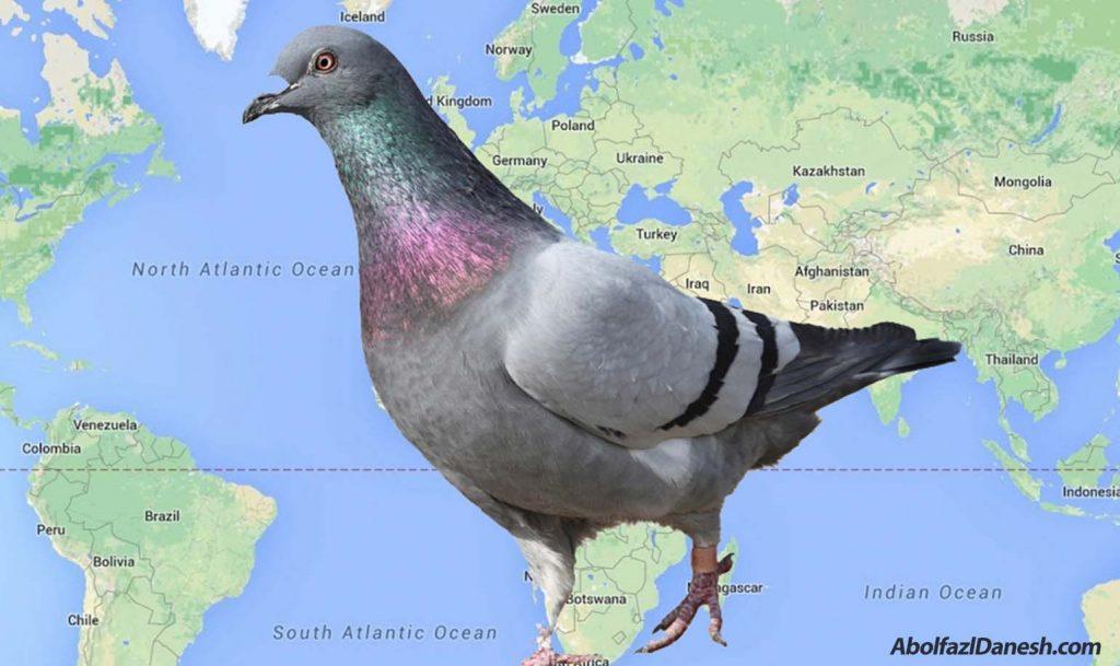 آشنایی با الگوریتم کبوتر گوگل